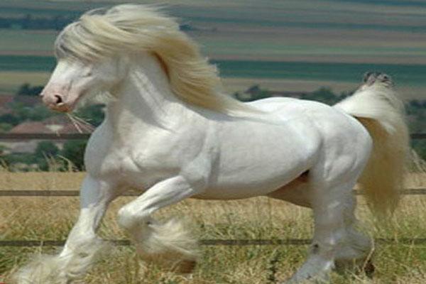عکس بسیار دیدنی از زیبا ترین اسب جهان