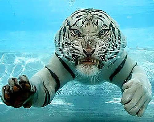 عکس های خنده دار و جالب از حیوانات