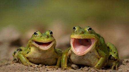 خنده دار ترین عکس نوشته های سری (15)