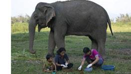 عمل آوری مرغوب ترین قهوه دنیا با مدفوع فیل!