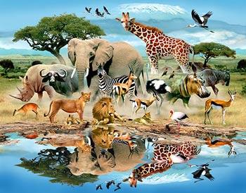 حيوانات چگونه با یکدیگر صحبت ميكنند؟