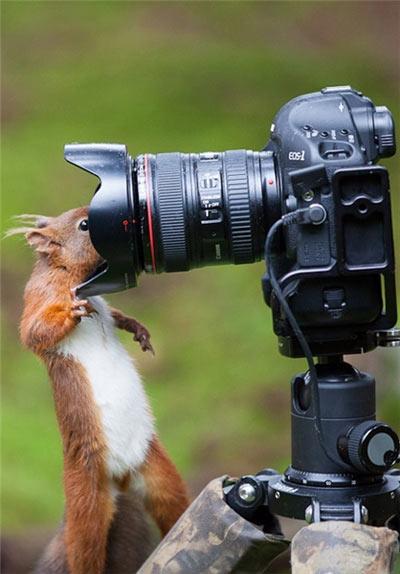 عکس های خاص و جالب از سنجاب ها