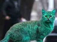 این گربه ی بسیار زیبا یک شهر را به آشوب کشید+عکس