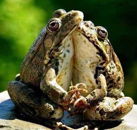 عاشقانه ترین عکس سال توسط این عکاس گرفته شد