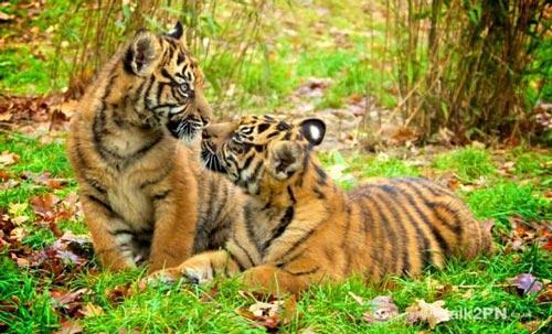 عکس های کمتر دیده شده از بوسه عاشقانه حیوانات