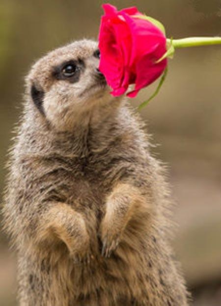 عکس های رمانتیک از حیوانات