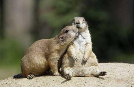 عکس های جالب لب گرفتن و بغل کردن عاشقانه حیوانات