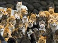 جزیره ای که فقط گربه ها در آن زندگی می کنند!(+عکس)