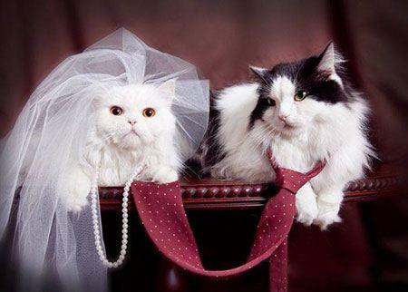 عکس های جالب حیواناتی که عروس و داماد شده اند