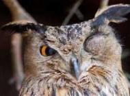 عکس های جالب و زیبا از حیوانات حیات وحش