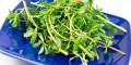 خواص بسیار مفید گیاه خرفه