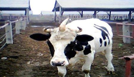 عکس حیوانات جهش یافته ترسناک و عجیب و غریب
