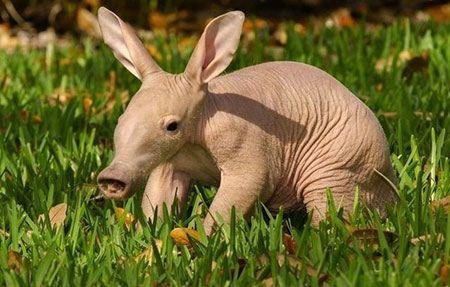عکسهای جالب و تماشایی از دوران نوزادی حیوانات جنگل