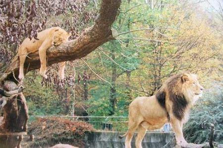 عکس های نایاب و دیدنی از جفت گیری حیوانات وحشی