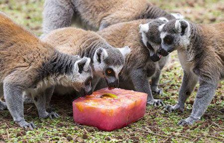 باحال ترین عکس های تماشایی از بستنی خوری حیوانات