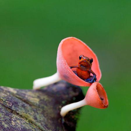 خنده دارترین عکسهاازدنیای قورباغه های دوست داشتنی