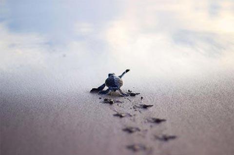 عکس هایی دیدنی و نایاب از دنیای لاک پشت ها