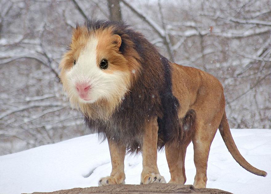 عکس های دیدنی و جالب از ازدواج اشتباهی حیوانات