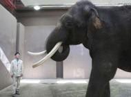 این فیل باهوش قادر به صحبت کردن است + عکس
