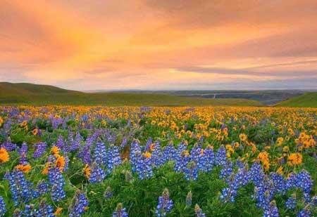 عکس های ناب و شگفت انگیز دیدنی طبیعت رنگارنگ