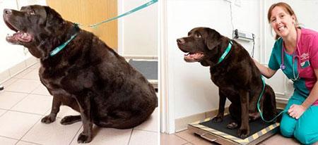 باشگاه تناسب اندام برای سگ و گربه های چاق (عکس)