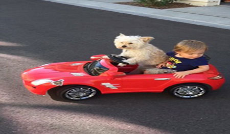سگ باهوشی که راننده شخصی اتومبیل بچه 4 ساله است (عکس)