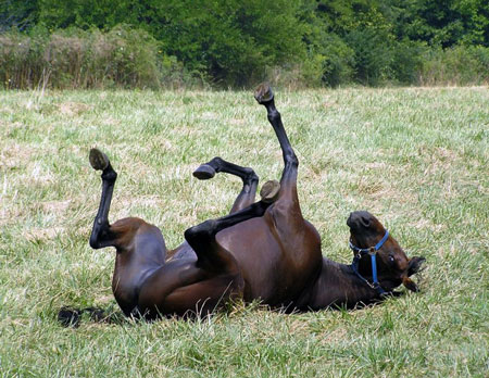 رابطه جنسی و تجاوز جنسی به اسب در سوئیس (عکس)