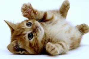 گربه ی انتحاری و ناز داعش! (عکس)