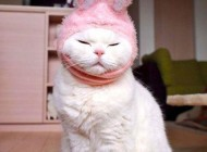 گربه سفید و و نازی که میلیون ها طرفدار دارد (عکس)