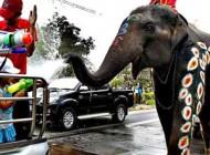 فستیوال جشن آب دختر پسرهای تایلندی با فیل ها