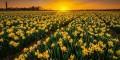 عکسهای دیدنی خارق العاده سرزمین گلها، کشور هلند