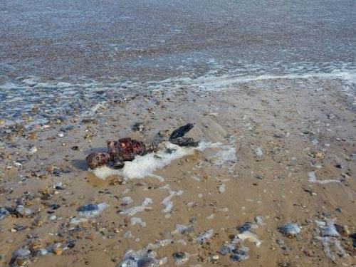 عکس های وحشتناک پیدا شدن پری دریایی واقعی (18+)