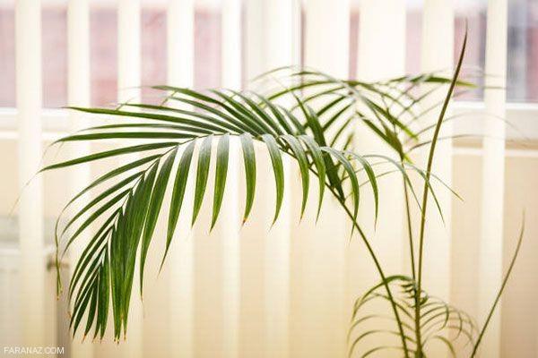 معرفی گل و گیاهان آپارتمانی که هوای خانه را تصفیه می کنند