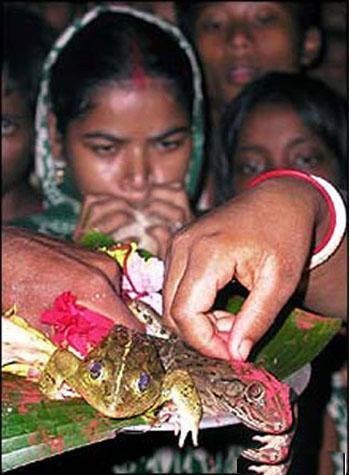 دخترانی که به عقد قورباغه درآمدند