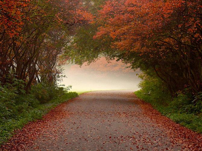 زیباترین تصاویر پاییز+متن