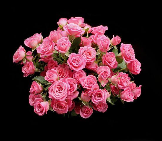 عکس های زیبا و لاکچری از گل