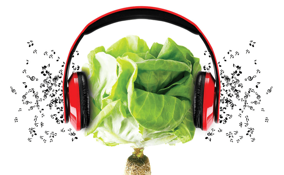موسیقی درمانی برای رشد گیاهان