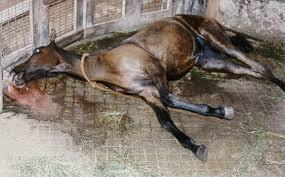 خواب اسب و تعبیر آن