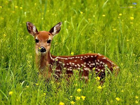 زیباترین عکس های حیوانات2019