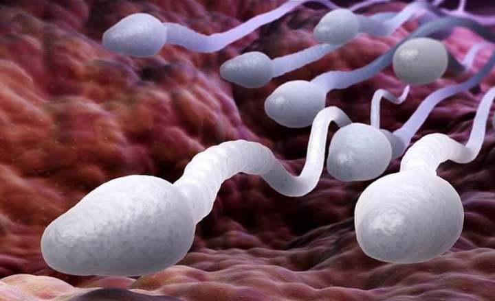 راه های تقویت کیفیت اسپرم