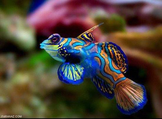 تصاویر خارق العاده از جهان زیر اقیانوس