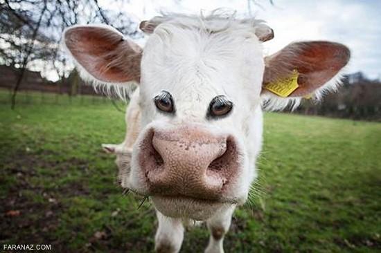 تصاویر خنده دار و جالب از حیوانات - شکار لحظه ها