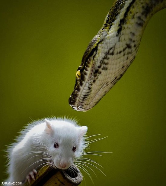حیات وحش زیبا و خارق العاده + عکس