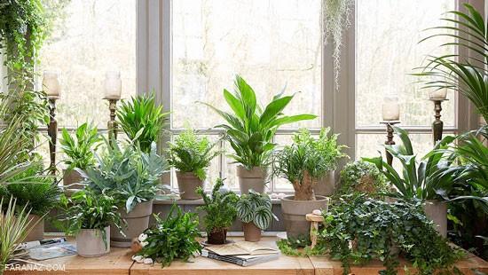 محبوب ترین گیاهان آپارتمانی و توصیه هایی برای نگهداری از آنها