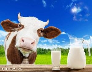 دانستنی های شگفت انگیز درباره ی مزایا و مضرات شیرگاو