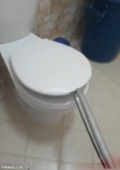 تصاویر مار کبری سیاه داخل توالت فرنگی یک خانه