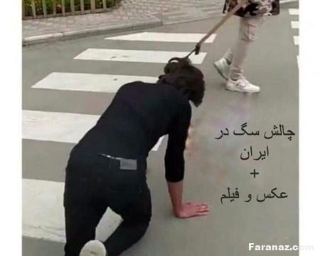 چالش سگ و دستگیری اجرا کنندگان در ایران + عکس و فیلم