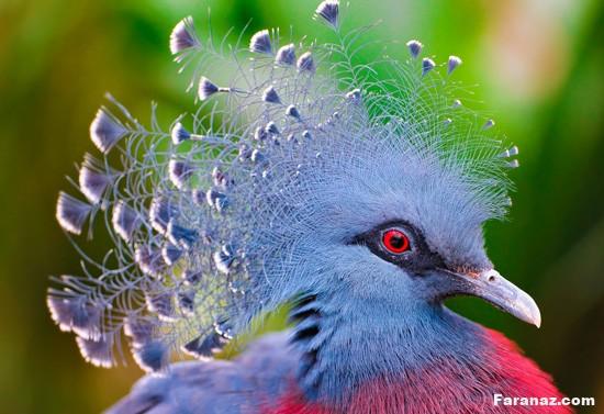 عکس های جدید زیبا و خارق العاده از حیوانات و حیات وحش